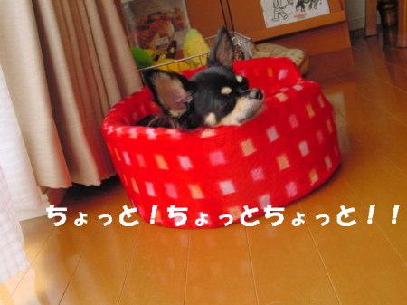 20060917173804.jpg
