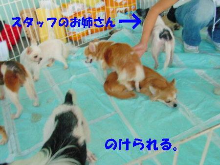 20060919224613.jpg
