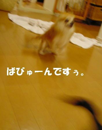 20060920230554.jpg