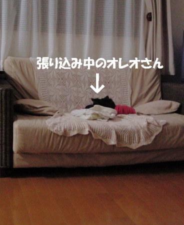 20060925012604.jpg