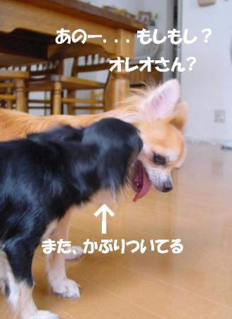 20060930012507.jpg