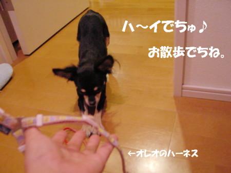 20061004003106.jpg