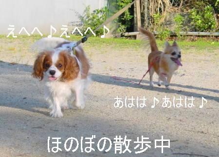 20061009214711.jpg