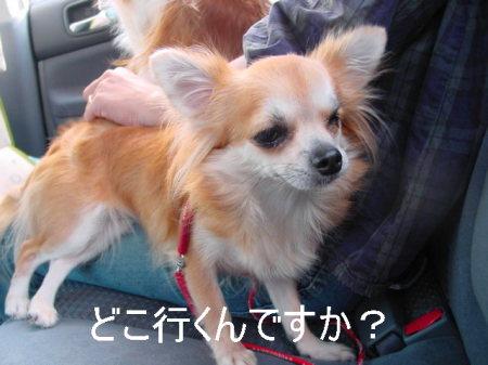 20061011030221.jpg