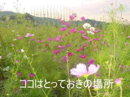 20061011030529.jpg