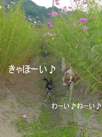 20061011030806.jpg
