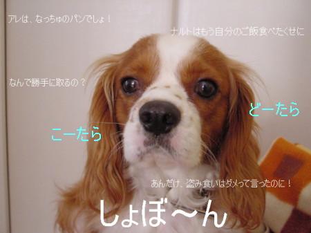 20061020160130.jpg