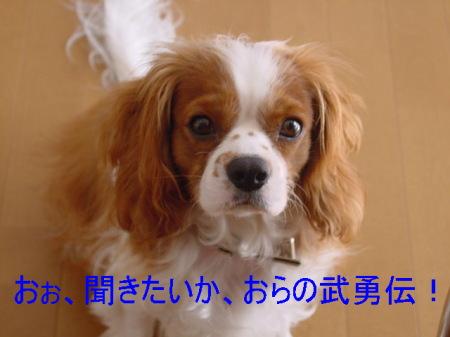 20061101223108.jpg