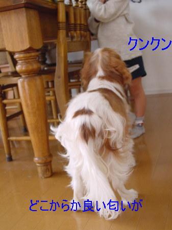 20061101223536.jpg