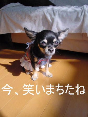 20061103013453.jpg