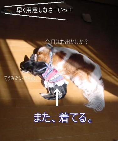 20061103224610.jpg