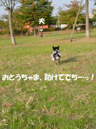 20061104234106.jpg