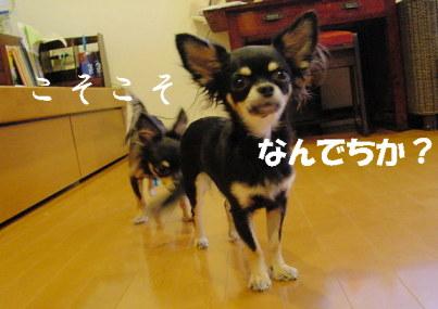 20061107203324.jpg