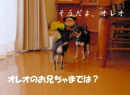 20061107203612.jpg