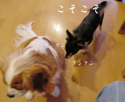 20061107204135.jpg