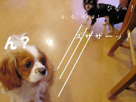 20061107204252.jpg