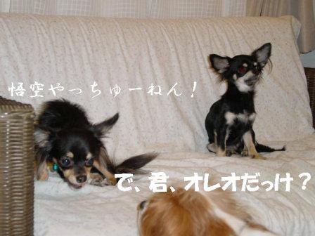 20061107210140.jpg