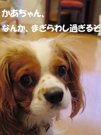 20061107210158.jpg