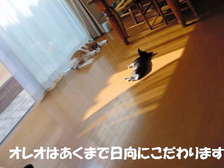 20061110012451.jpg