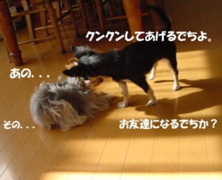 20061111014512.jpg
