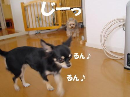 20061111014554.jpg