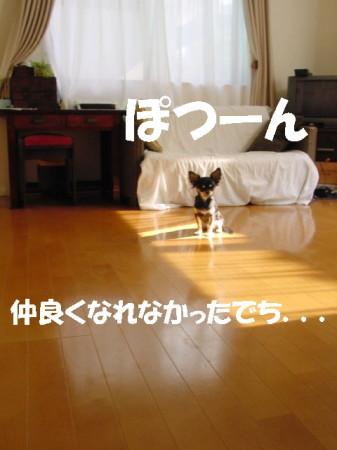 20061111015104.jpg