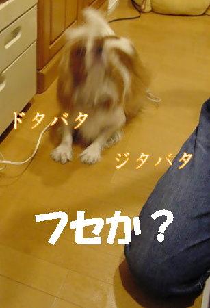 20061114004234.jpg
