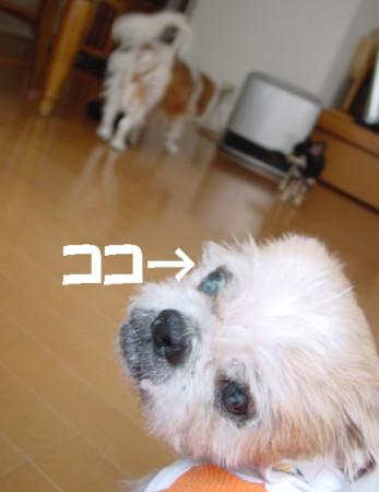 20061118232515.jpg