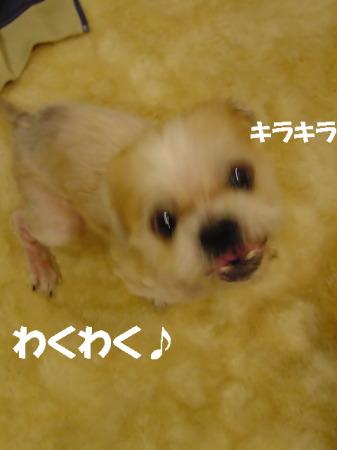 20061118232545.jpg