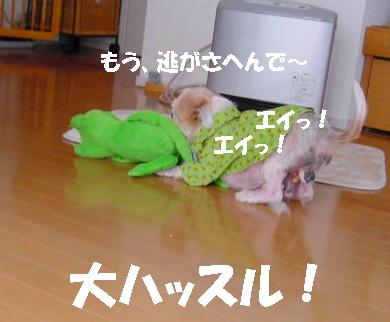 20061204220932.jpg