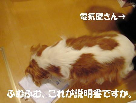 20061219105636.jpg