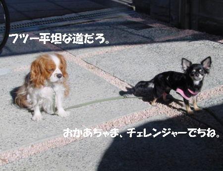20061221043108.jpg