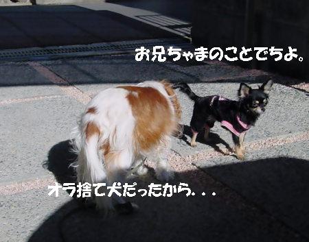 20061221044149.jpg