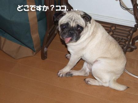 20070109234157.jpg
