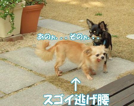 20070310104458.jpg