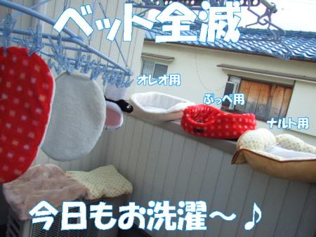 20070313202501.jpg