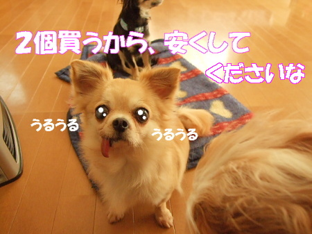 20070324082528.jpg