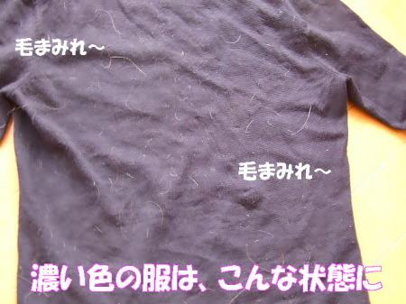 20070325232458.jpg