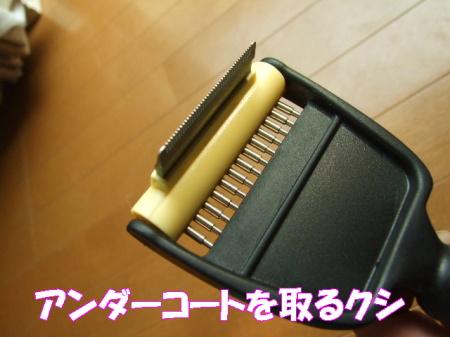 20070327125954.jpg