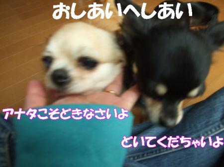 20070329101600.jpg