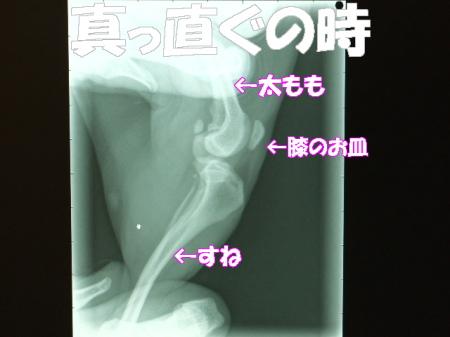 20070404150049.jpg