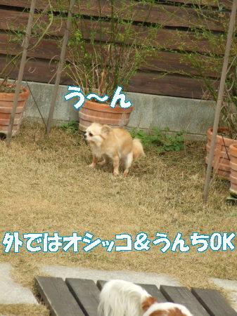 20070408221213.jpg