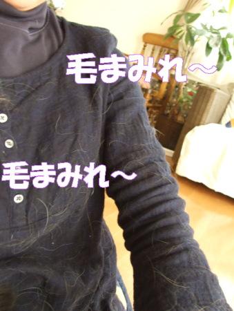 20070417005024.jpg