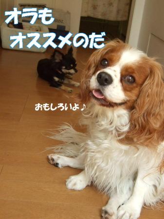20070612094950.jpg