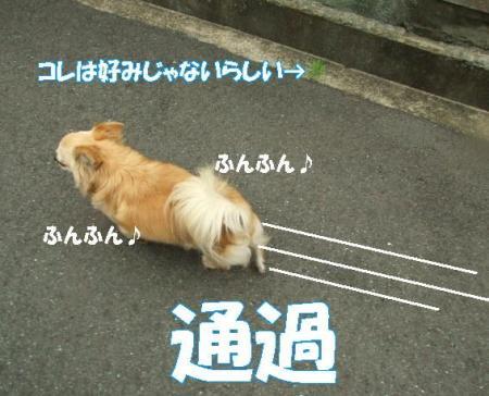 20070701204037.jpg