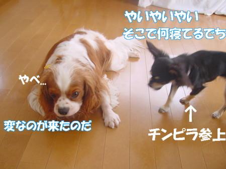 20070718111459.jpg