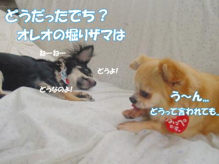 20070718111546.jpg