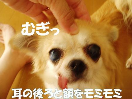 20070719000519.jpg