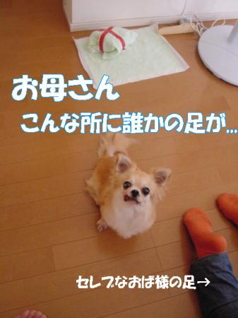 20070725160439.jpg