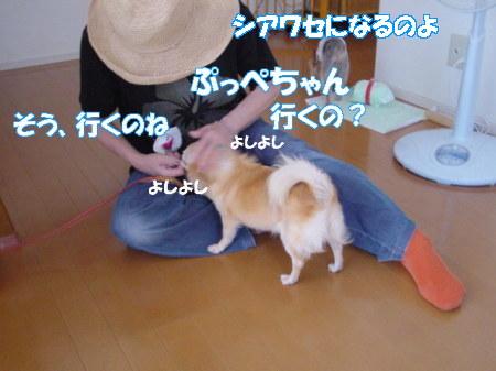 20070726183117.jpg